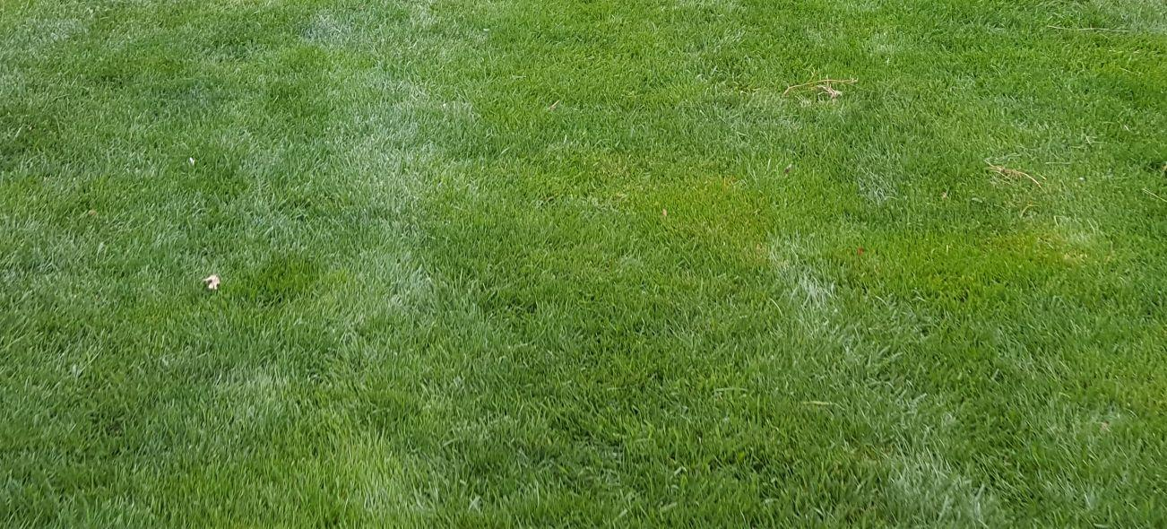 How To Properly Water Your Lawn A Cut Above