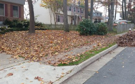 Should I Remove Fallen Leaves From My Lawn?