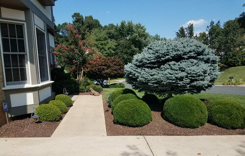 Landscaping Mulch Bed